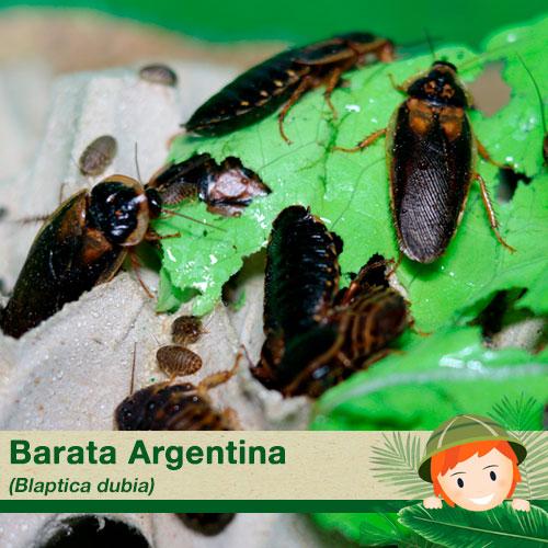 Baratas Argentinas