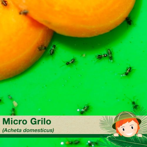 Micro Grilos